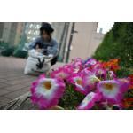 8-Hachi-