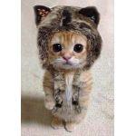 みけ猫のyunn
