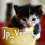 Jp_Venus