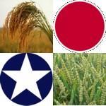 米食う日本、パン食う米国