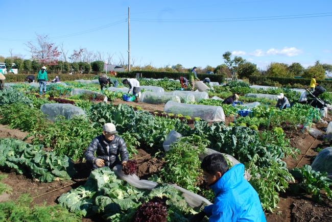 収穫の喜びをおおぜいでわかちあいました。農業体験農園「のらっこあきる野」(2017年11月)