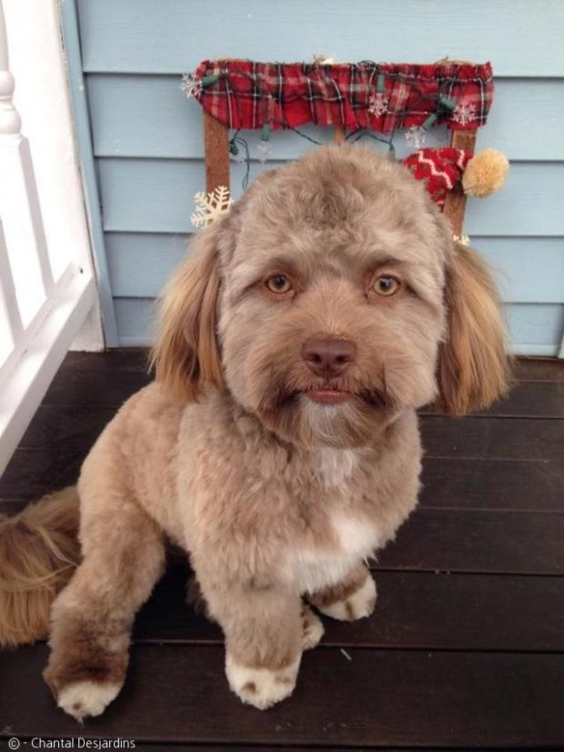 人の顔のような犬