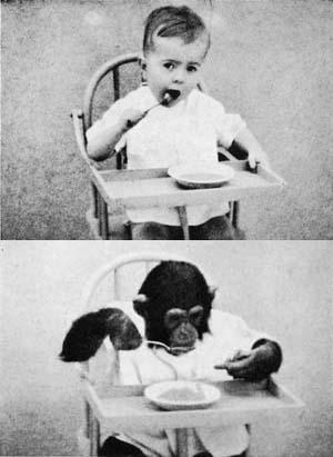 人間とチンパンジー