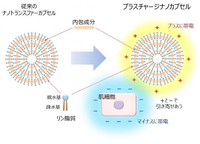 図1.プラスチャージナノカプセルのイメージ図