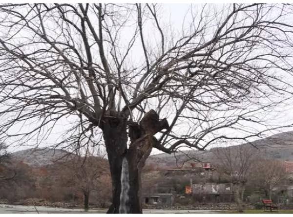 木 から 水 が 出る どこ の 国