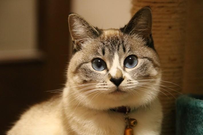 Twitter/@tomikopinkcats