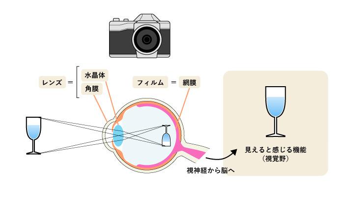 視覚野のメカニズム