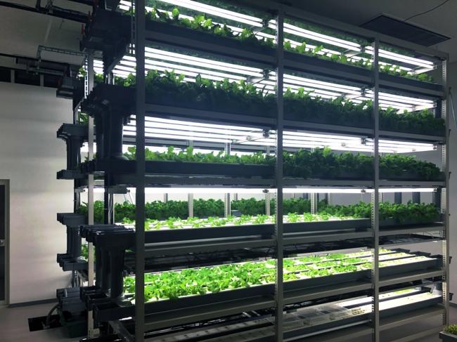 東葛テクノプラザ内の研究用植物工場システム