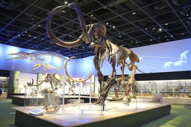 豊橋市自然史博物館(新生代展示室)