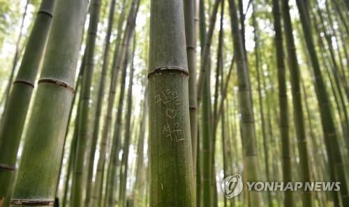京都の観光地の竹に落書き