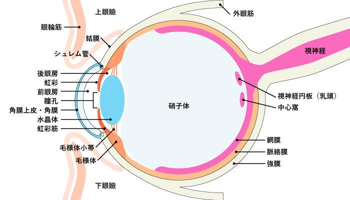 目の各部位名称