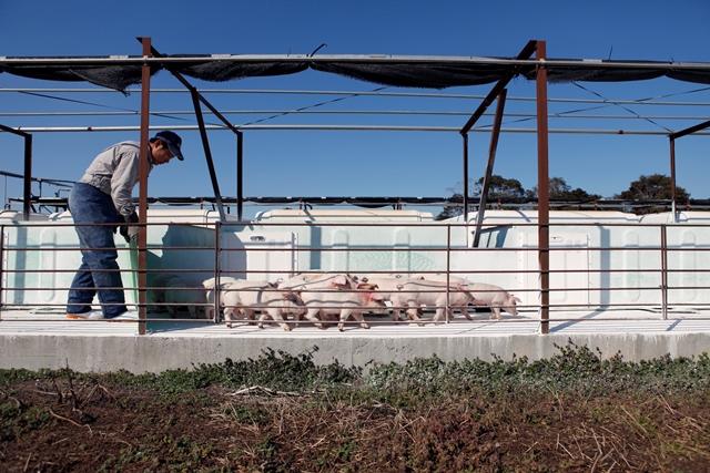 環境と向き合う養豚を目指しています