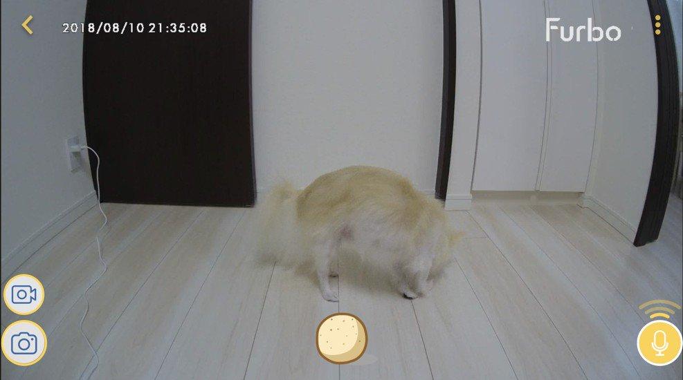 Furboドッグカメラ Cinnamoroll Limited Edition 画面 マイクイメージ