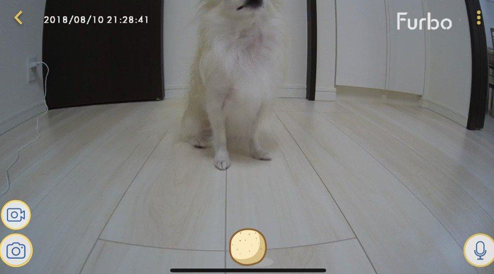 Furboドッグカメラ Cinnamoroll Limited Edition おやつ画面