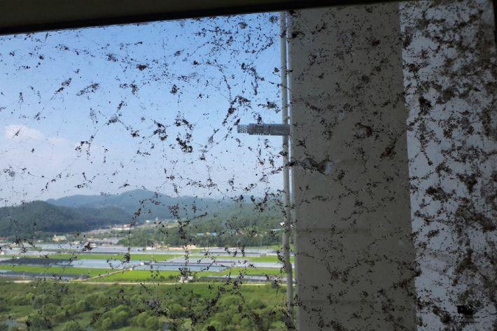 蜘蛛がびっしり