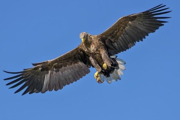eagle-1753002_640_e