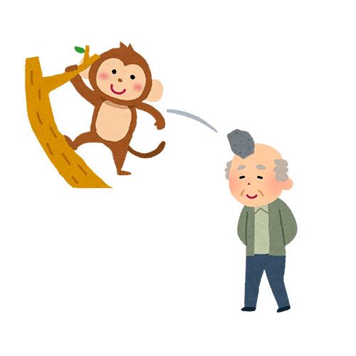 猿が投げた石