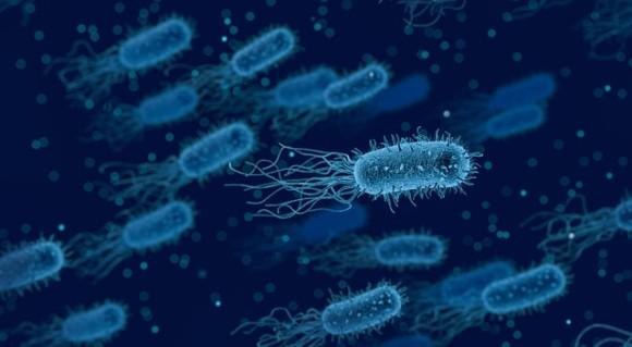 bacteria-3662695_640_e