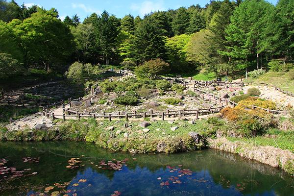 六甲高山植物園 ロックガーデン