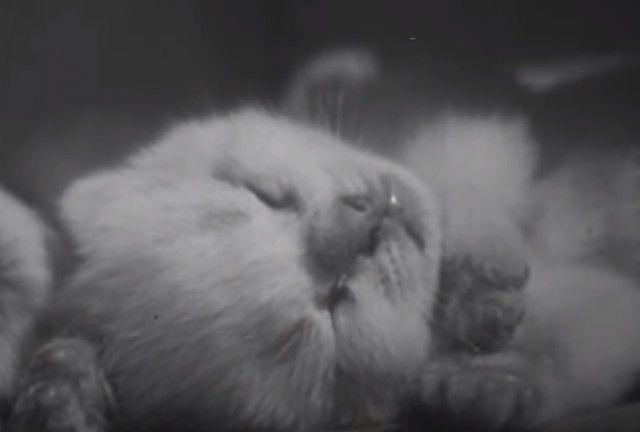 1947cats12_e