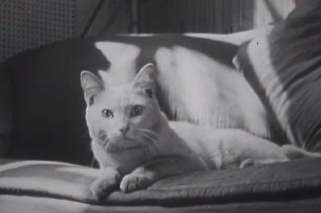1947cats14_e