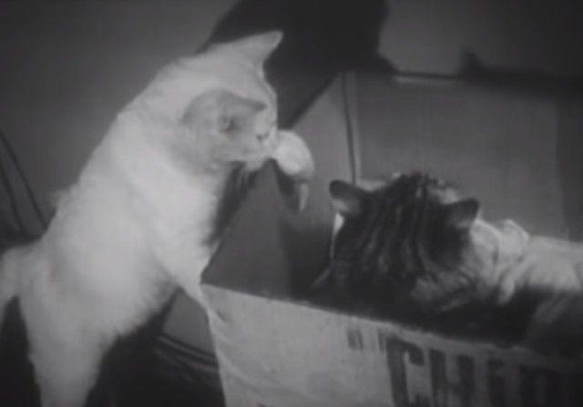 1947cats11_e