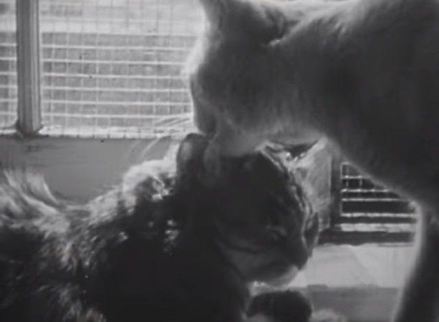 1947cats3_e