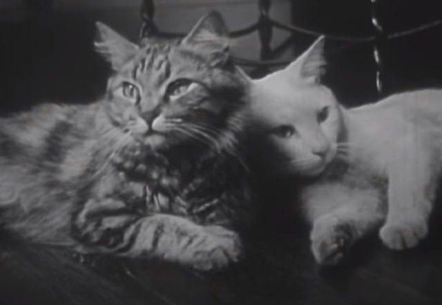 1947cats0_e