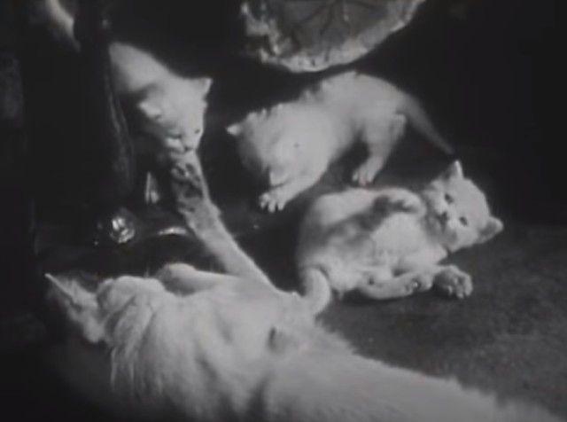 1947cats16_e