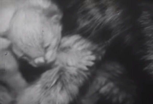 1947cats7_e