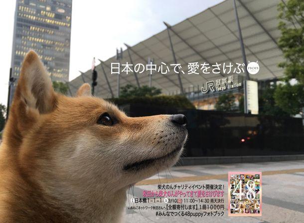「日本の中心で、愛をさけぶ」