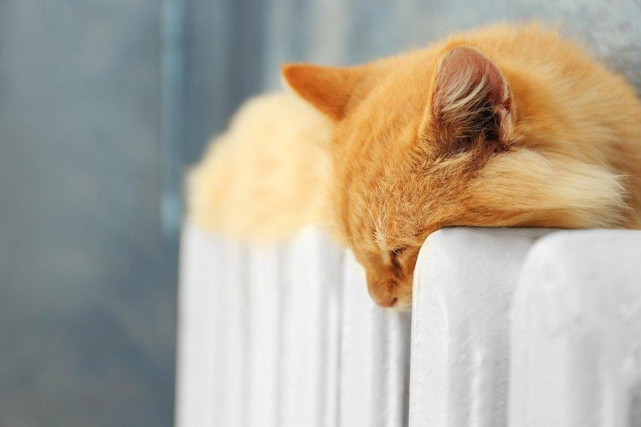 暖房の上で眠る猫