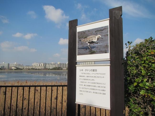 「干潟の遊歩道 解説板」をリニューアルしました。