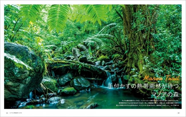手付かずの熱帯雨林が待つマノアの森