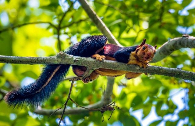 Multicoloured-squirrel5_e