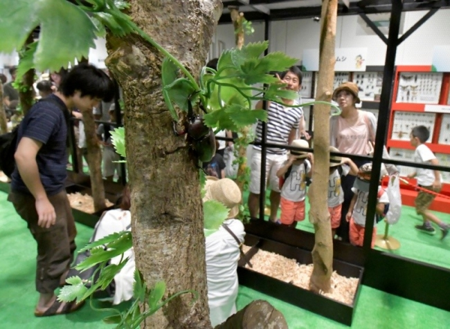 ▲ふれあいの森コーナー(過去の様子)(C)大昆虫展実行委員会
