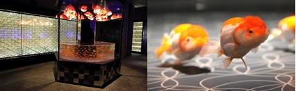 ▲金魚展示ゾーン「江戸リウム」