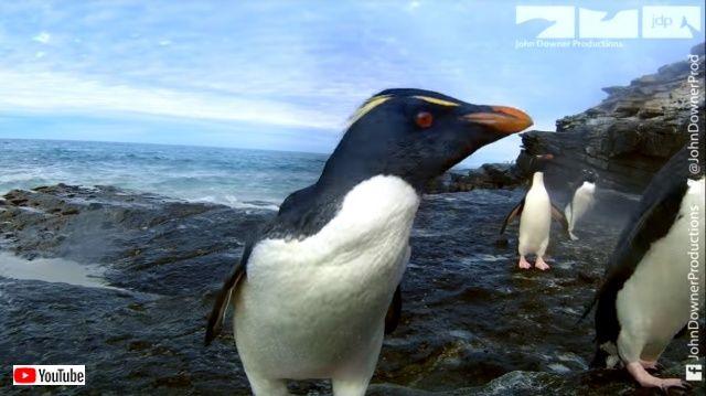 penguincam7_640
