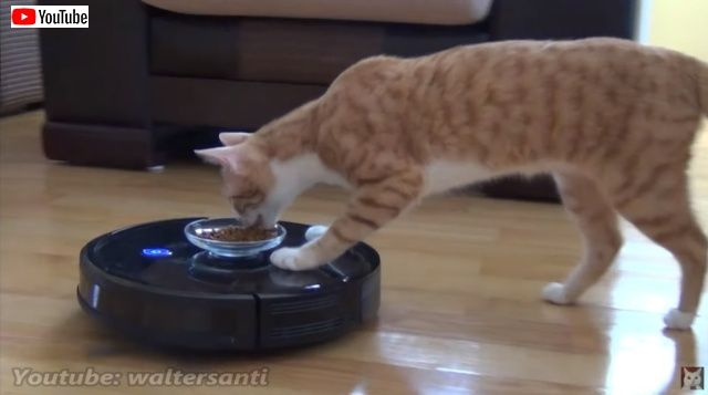 catsnroomba0_batch