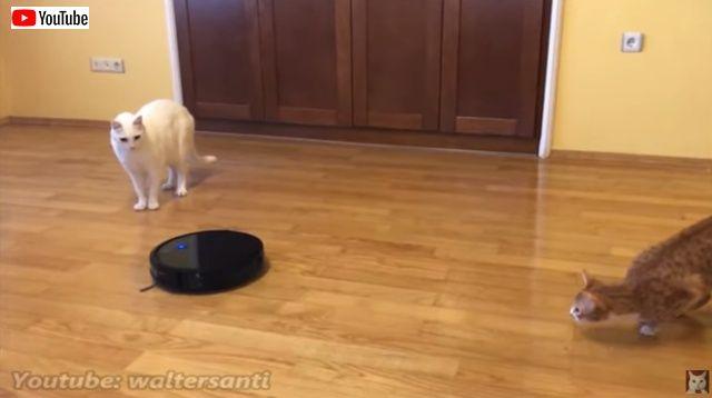 catsnroomba4_batch