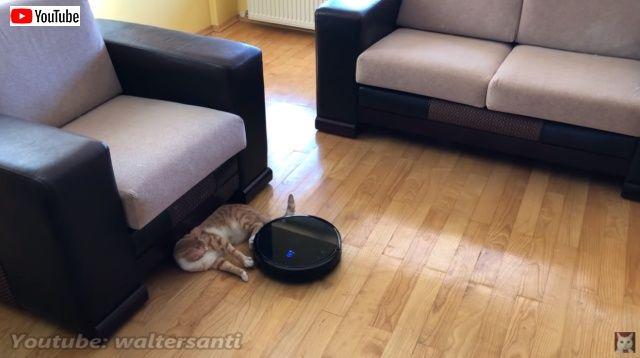 catsnroomba6_batch