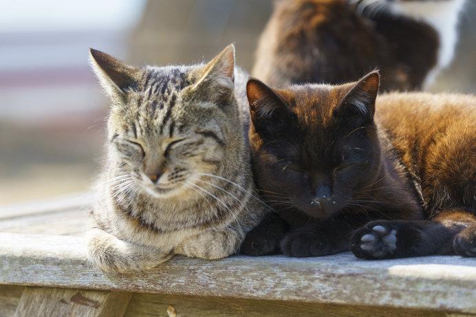 大漁の守り神として田代島で大切にされているネコたち、その数130匹以上!
