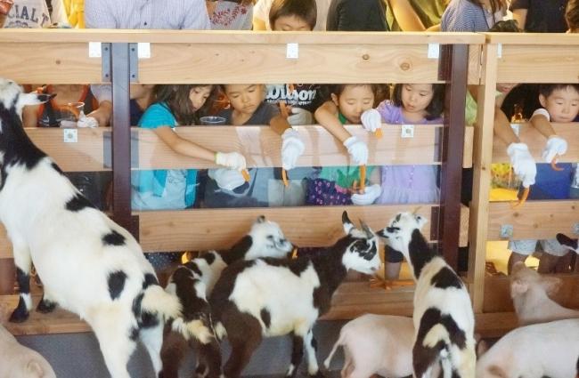 ▲パソナ大手町牧場での動物とのふれあい体験
