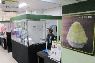 かき氷工房雪菓「バジルチーズ」はオリーブ油と3種類のチーズが絶妙だという