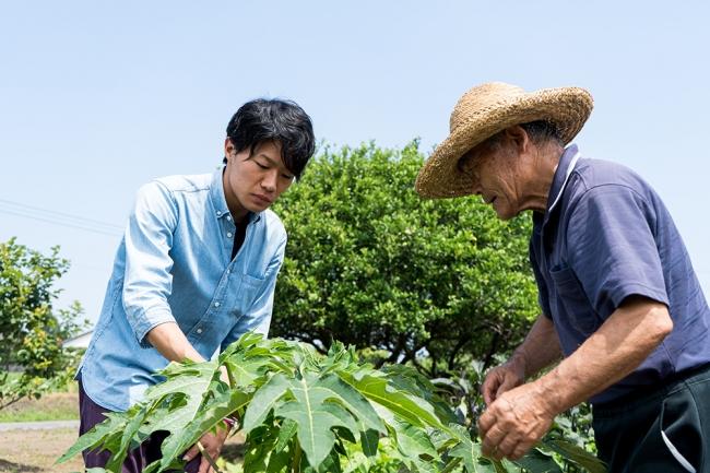 地元農家の協力を得て青パパイヤの生産に取り組む岩本さん。青パパイヤ茶をお茶で楽しむ新しいカルチャーを世界に発信したいと考えています。