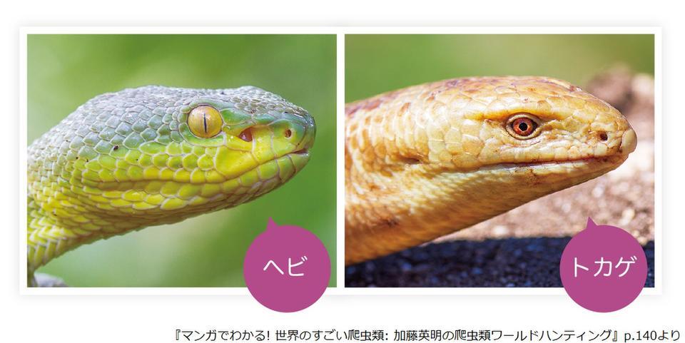 爬虫類 体表の様子