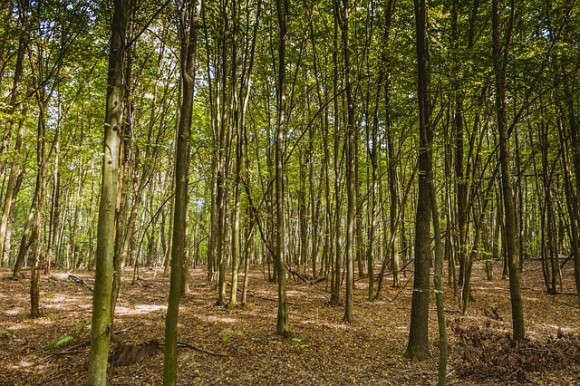 forest-976766_640_e