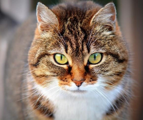 cat4_e0