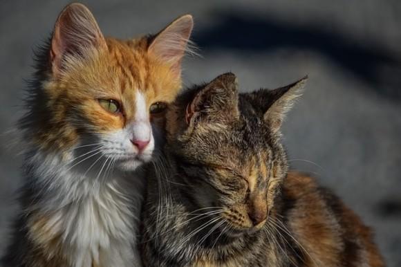 cats2_e