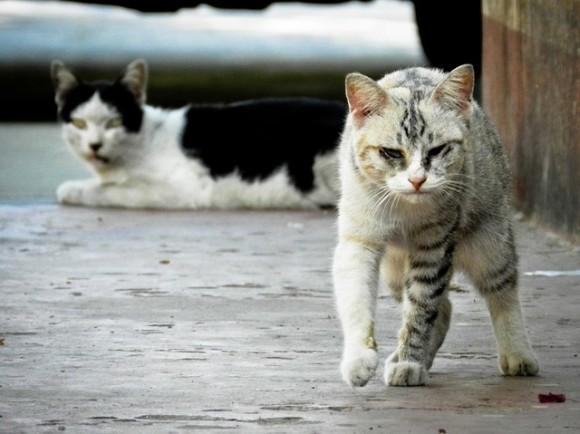 cat6_e0